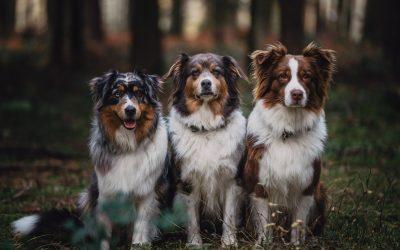 Luna,Sora und Daymie – wie läuft so ein Hundeshooting eigentlich ab?