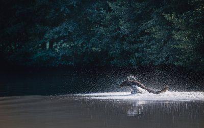 Blue – Hunde Wassershooting im Bach und See