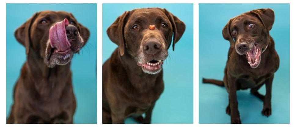 Nala – Labrador mit Spaßfaktor
